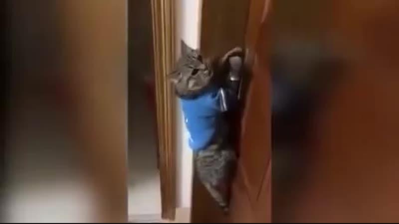 Не когда не постил котиков но здесь не смог удержаться Говорящий кот