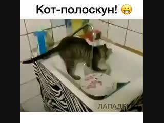 Есть енот полоскун, а есть и кот)