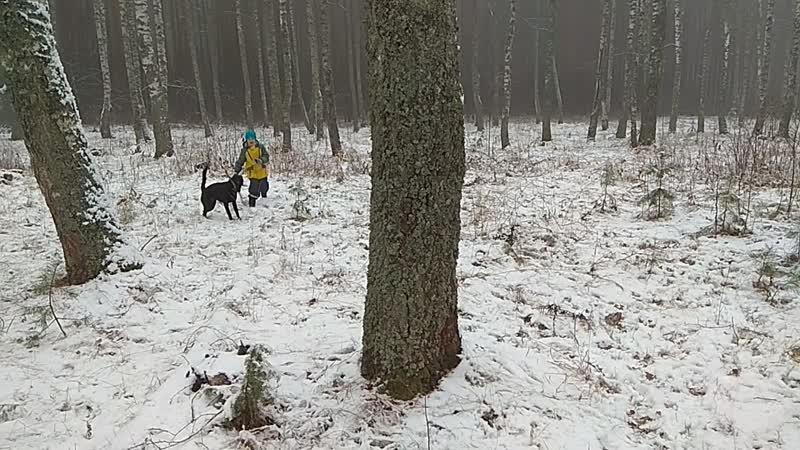 Первый снег Варды и Джесси 2018 год