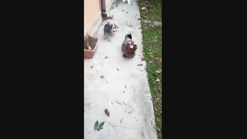 My pupies