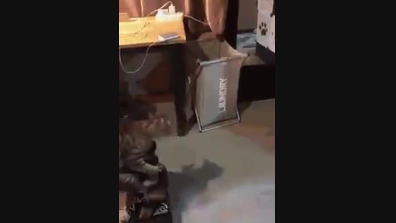 Коте и гироскутер