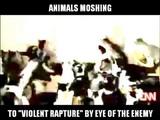 ANIMALS MOSHING ANIMAL MOSH PITS CATS DOGS MONKEYS SHEEP ANTS MOSH