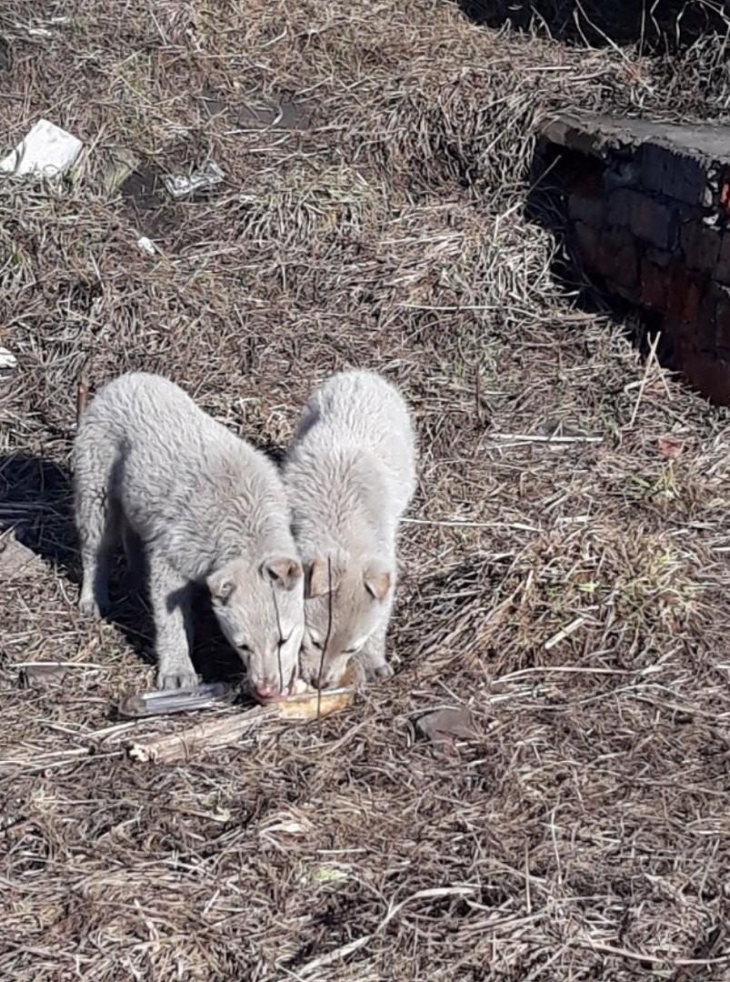 2 чудесных щенка ищут дом!