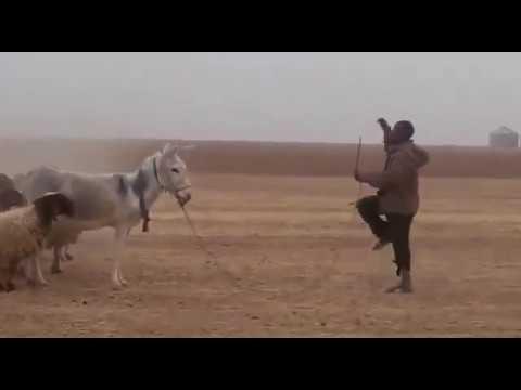 Funny shepherd! Antoine Barret la république en marche