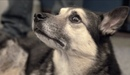 Собаки Джуманджи. Животные в мегаполисе