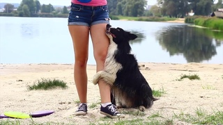 Frisbee trainings near the lake with border collie Volt