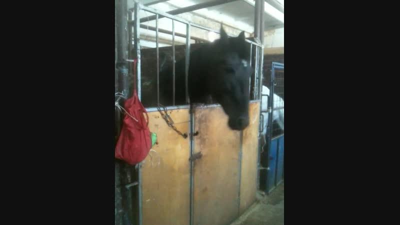 Ваня дежурит на конюшне Лошади В Кульковой