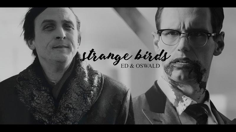 [ nygmobblepot    strange birds ] [ ed oswald 🐧❔]