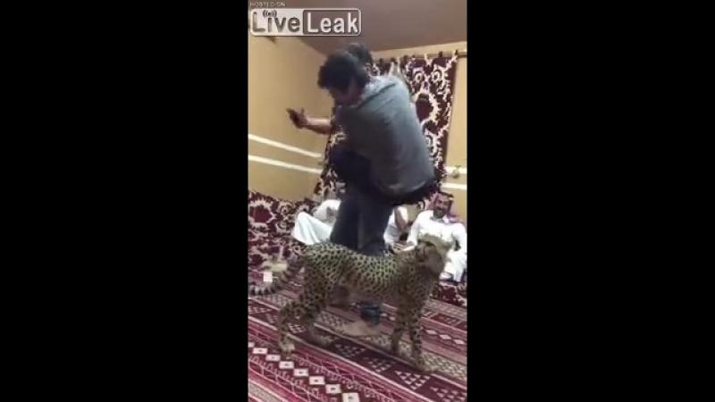 Гепард на арабской вечеринке