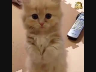 Котики просят кушать