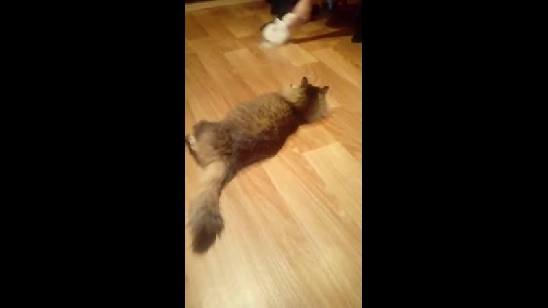 Левкин кот обормот