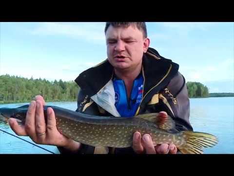 РЫБАЛКА в жабовнике на неогруженный силикон Весенняя рыбалка с AikoLand TV