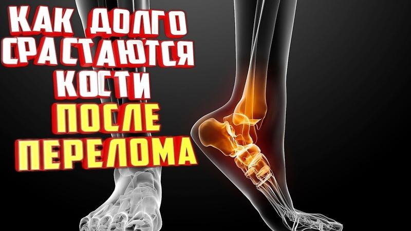 Как долго срастаются кости после перелома? Вот ответ