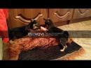 Мои милашки Микки и Линда) devil_tym8161