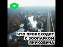 Зоопарк Януковича | ROMB