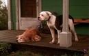 Видео к фильму Дорога домой Невероятное путешествие 1993 Трейлер