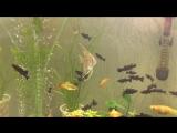 Мой 100 литровый аквариум