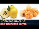 Обзор экзотических фруктов айва и физалис