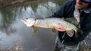 Creek Pike Lure Fishing with Westin