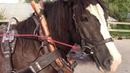 How To Clean Leather Horse Harness