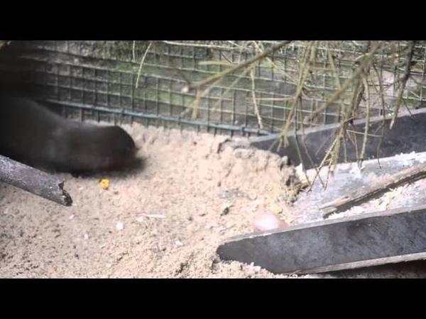 Mink Enrichment in Tallinn Zoo