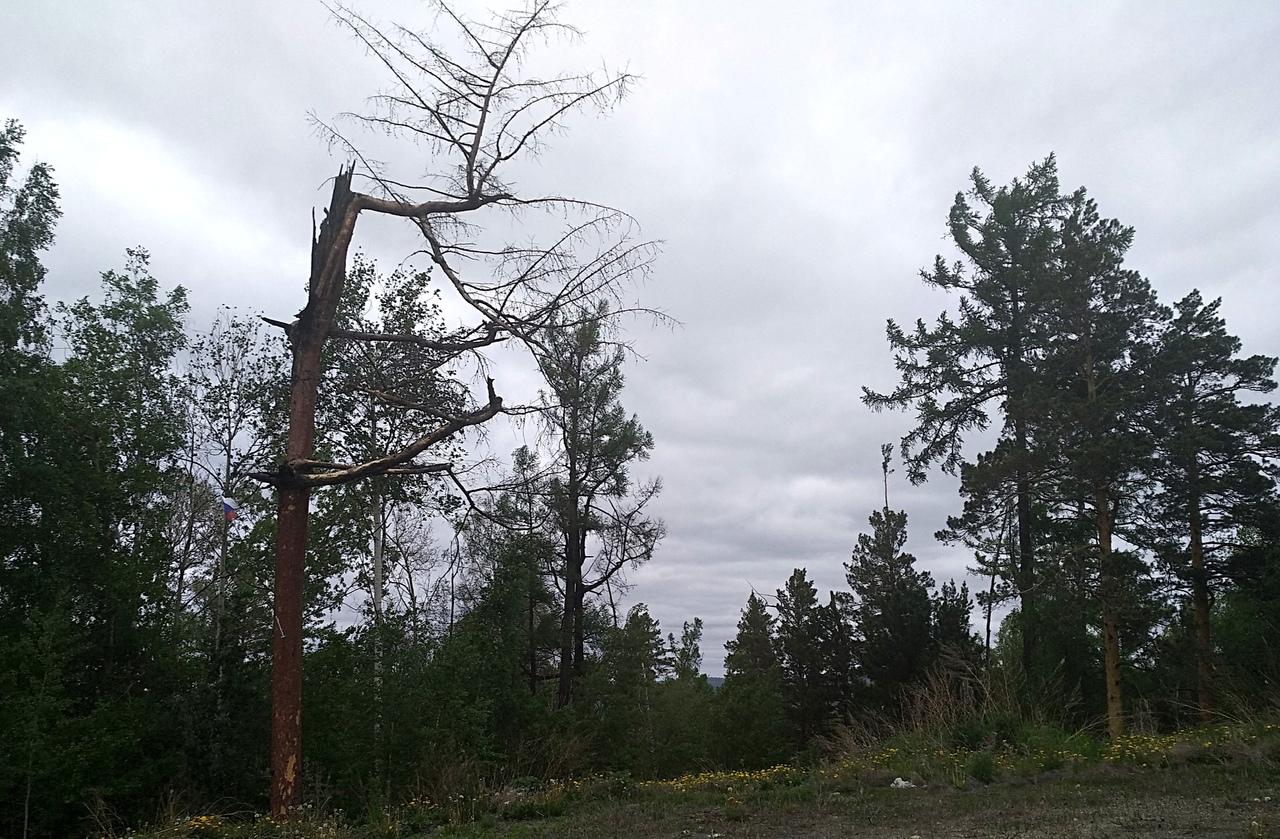 Патриотический флешмоб из леса
