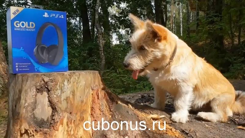 Первый августовский совместный заказ на computeruniverse.ru