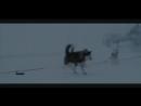 Клип про любовь и верность собак Хаски к человеку