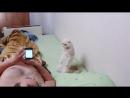 Постоянно ржу когда вижу это видео Ну как можно научить кота вставать смирно