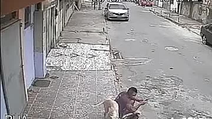 Когда тебя не уважают даже собаки