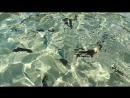 Голодные рыбки красного моря  алладинотельегипетотдыхкрасноемореотдыхаемрыбкиподводныймиррыбахирург