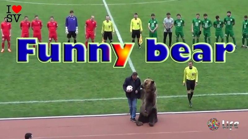Funny bear | Медведь Тима отдал первый пас в Пятигорске