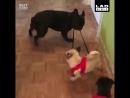 Международный день щенка