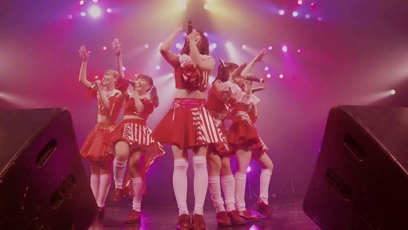 Very Very Red Berry 「ちらり☆しらたまガール」ライブ映像