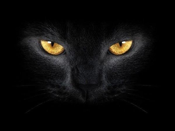 В данный момент это не могут объяснить учёные. Сверхъестественные способности кошки. Док. фильм.