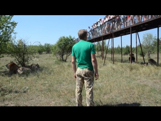 Диалог Олега Зубкова с посетителями Тайгана стоя среди львов !Крым