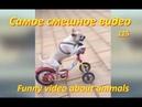 Самые смешные видео про животных 115 Funny video
