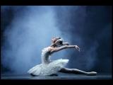 КВЦ Легенды балета.Графика.Марина Быковская