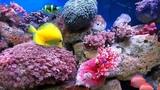ДЕЛЬФИНЫ КОРАЛЛЫ МОРЕ КЛАССИЧЕСКАЯ МУЗЫКА OLPHINS sea corals CLASSICAL MUSIC