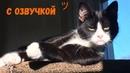 СМЕШНЫЕ КОТЫ С ОЗВУЧКОЙ – Лютые приколы с котами и кошками Смешные кошки МатроскинТВ 2019