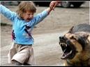 Собака напала на девочку, после на ее маму.