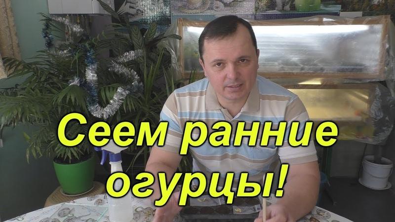 РАННИЙ ПОСЕВ ОГУРЦОВ ДЛЯ КОНТЕЙНЕРОВ.