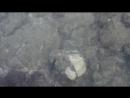 Видео Охота на осьминожку на пляже утром на о. Корфу