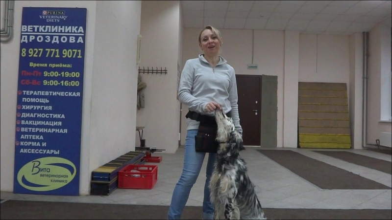 Охота и послушание собак О влиянии послушания на рабочие качества охотничьих собак