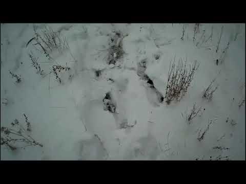 Загонная охота на косулю Удачные выстрелы Corral ROE deer hunting Lucky shot