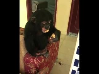 Monkey Smoking Weed 🍀