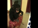 Monkey Smoking Weed