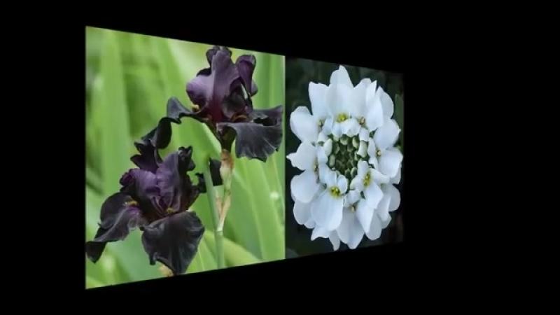 ZNAKI- Мой любимый цветок.