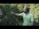 Разнообразие побегов сосна лиственница Морфология растений 6