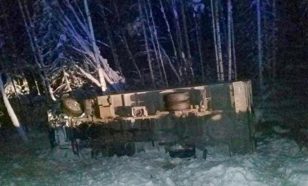 На трассе «Братск – Усть-Илимск» погиб цирковой верблюд